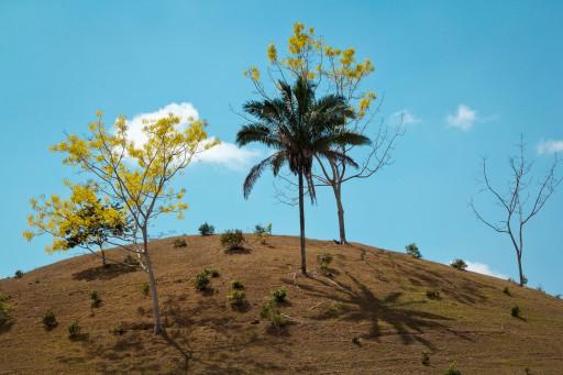 surreal hill three