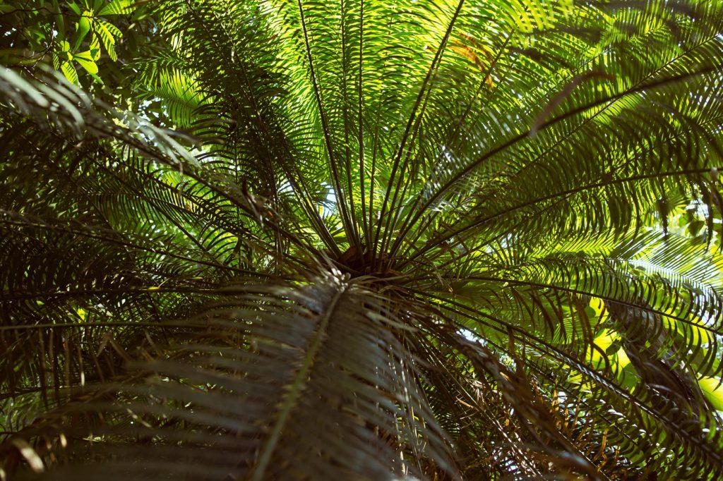 Tropical Green Sri Lanka by Rose Time